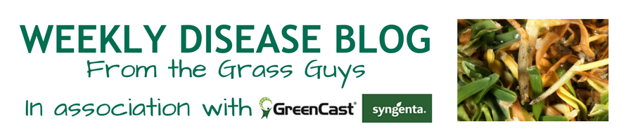 Disease Blog logo