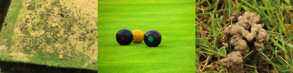image of worm casts on a bowling green, and bowls balls