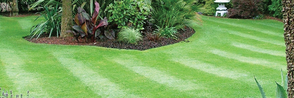 Lawn Maintenance Header
