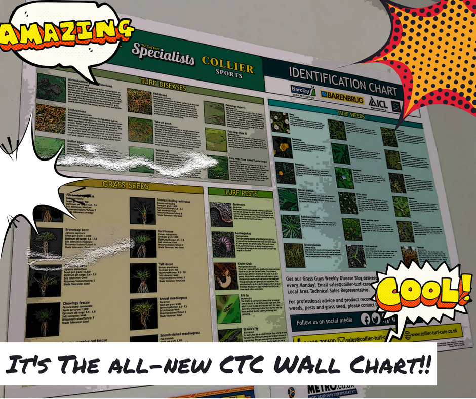 picture of wall chart