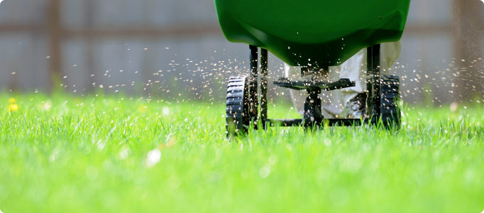 granular lawn fertiliser application